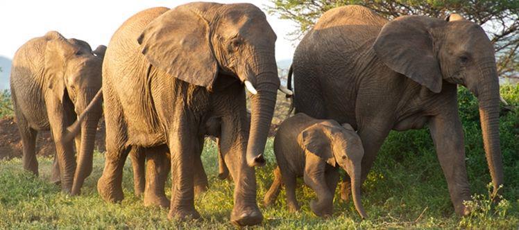Kruger park tour